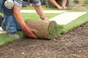 Important info about sod - The Remington Group