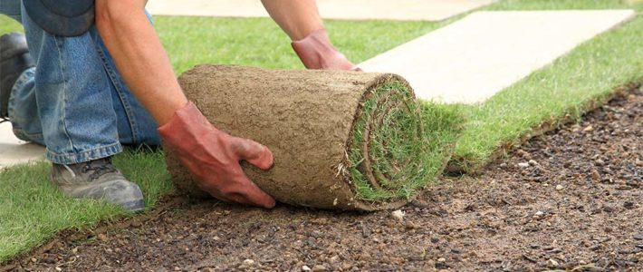 'Tis the season to stay green: Important message about sod